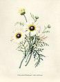 Vintage Flower illustration by Pierre-Joseph Redouté, digitally enhanced by rawpixel 79.jpg