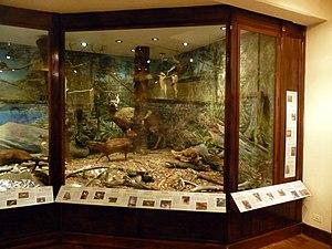 Francisco Moreno Museum of Patagonia - Patagonic fauna exhibit