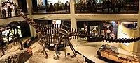WLA hmns Diplodocus.jpg
