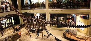 <i>Galeamopus</i> genus of reptiles (fossil)
