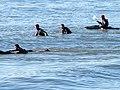 Water Sports at Aberystwyth - geograph.org.uk - 685558.jpg