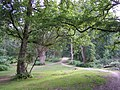 Well-worn path through Matley Wood, New Forest - geograph.org.uk - 189921.jpg