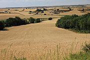 Wheat fields in Burgos