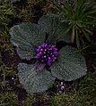 Whf purple 21.jpg