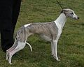 Whippet stacked (cropped).jpg