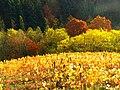 Wijn - panoramio.jpg