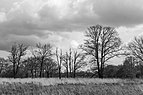 Wijnjeterper Schar, Natura 2000-gebied provincie Friesland 06 z.w.jpg