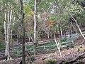 Wild grass cage 02.jpg