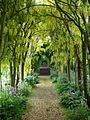 Wisteria at Haseley Court, Oxfordshire.jpg