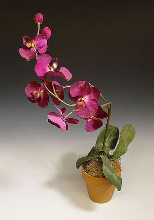 A Nero Wolfe Mystery - Silk orchid prop from A Nero Wolfe Mystery