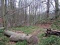 Woodland Path - geograph.org.uk - 351466.jpg