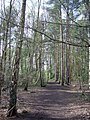 Woodland near Heath Lake - geograph.org.uk - 773407.jpg