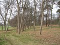 Woods, Mosshouse Point - geograph.org.uk - 1229260.jpg