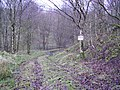 Woods Near Caton Moor - geograph.org.uk - 102269.jpg