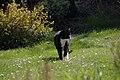 Wraxall 2012 MMB 31 Smudge.jpg