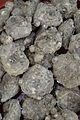 Zantedeschia aethiopica Bulbs - Kolkata 2013-11-10 4471.JPG