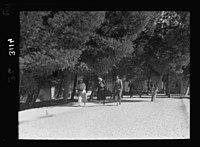 Zionist activities in Palestine. The Hebrew University campus. Students going to class LOC matpc.15178.jpg