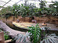 Zoo Koeln Hippodom Hippopotamus amphibius.jpg