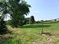 Zottegem Erwetegem Ten Dale Vallei Karnemelkbeek met steilrand - 228070 - onroerenderfgoed.jpg