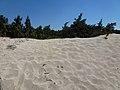Αμμοθίνες και βλάστηση στη Νήσο Χρυσή - Sand dunes and vegetation on Chrysi island 01.jpg
