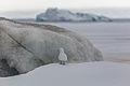 Белая чайка на ЗФИ.jpg