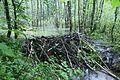 Бобровая плотина - panoramio (1).jpg