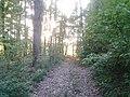 Буський р-н, Верблянське лісництво кв,55(1) Сторонибаби.jpg