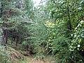 В лесу. Фото Виктора Белоусова. - panoramio.jpg