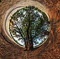 Дерево жизни. Сферическая панорама.jpg