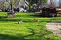"""Зајаци како дел од дворот на манастирот """"Св. Ѓорѓи"""" во Неготино.JPG"""