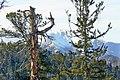Зима. - panoramio (1).jpg