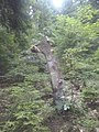 Конче в Родопите.jpg