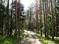 Лесная дорога meža ceļš - panoramio - Aleksandrs Timofejev… (10).jpg