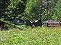 Мисюны. Заброшенный дом лесника - panoramio.jpg
