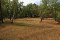 Роща с западной стороны - panoramio.jpg