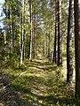 Светлая аллея в дремучем лесу - panoramio.jpg