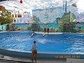 Сочинский дельфинарий парка «Ривьера». 74.jpg