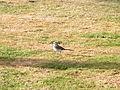 Шарм-еш-Шейх птаха.jpg