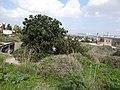 גבעת העמדות ברכס נשר ההיסטורי - ברכת מים מנדטורית מעליה עמדת הגנה ממלחמת העצמאות (9).jpg