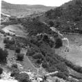 יערות הכרמל צילום טים גידל (בתוך אלבום יערות הכרמל - נהריה )-PHAL-1620402.png