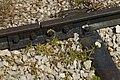רכבת העמק - מעבירי מים והסוללה - צומת העמקים - עמק יזרעאל והגלבוע (76).JPG