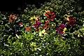 عکس از گلها و گیاهان باغ بوتانیکال تفلیس - گرجستان 02.jpg