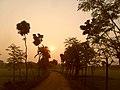 সূর্যের রঙ্গে রাঙ্গানো সকাল.jpg