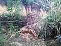 初探吊神山-越野车穿越探路20130206 - panoramio (9).jpg