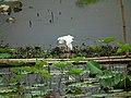 嘉模公園 Carmo Park - panoramio (1).jpg