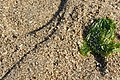 宮島-砂浜 - panoramio.jpg