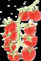 小番茄cherrytomato.png
