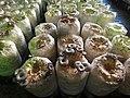 新社菇類種植.JPG