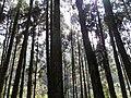 杉林溪森林公園 Shanlinxi Forest Park - panoramio (1).jpg