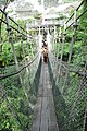 索桥 - panoramio (1).jpg